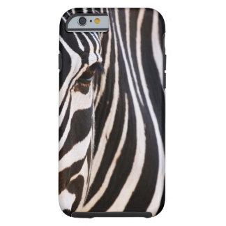 Cebra rayada blanco y negro funda de iPhone 6 tough