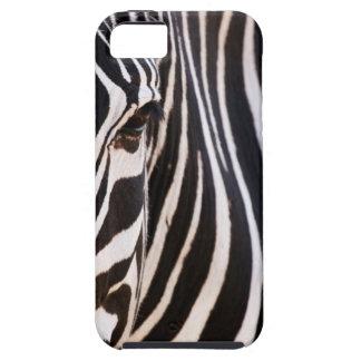Cebra rayada blanco y negro iPhone 5 carcasas
