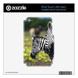 Cebra Skins Para iPod Touch 4G