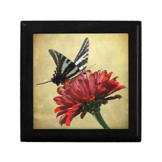 Cebra Swallowtail Caja De Joyas