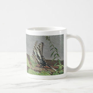 Cebra Swallowtail Tazas