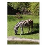 Cebra y Gazelle Postales