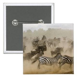cebras (burchelli del Equus) y wildebeest Pin