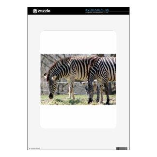 Cebras de alimentación calcomanías para iPad