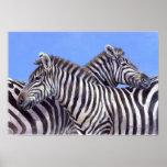 Cebras de Donna Crawshaw Posters