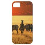 Cebras de la salida del sol iPhone 5 carcasas