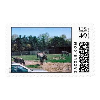 Cebras en el Sun Sello Postal