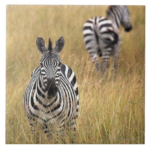 Cebras en hierba alta teja  ceramica
