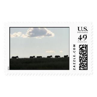 cebras en horizonte sellos