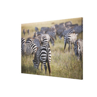 Cebras en la migración, quagga de los llanos del impresión en lienzo