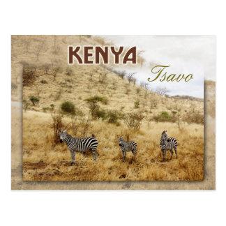 Cebras en Tsavo, Kenia Tarjetas Postales