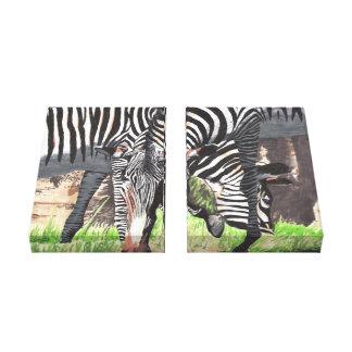 Cebras Lona Estirada Galerias