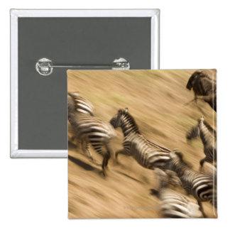 Cebras (quagga del Equus) y wildebeest Pins