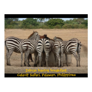 Cebras que desayunan tarjeta postal