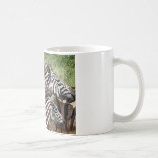 Cebras Suráfrica Taza