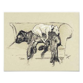 """Cecil Aldin 1902 """"perros perezosos que duermen en Fotografía"""
