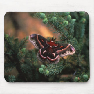Cecropia Butterfly Mouse Mat