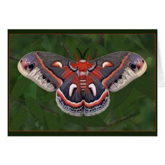 Cecropia Moth Card