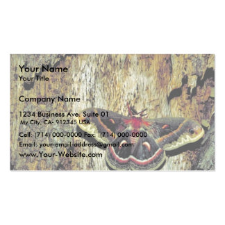 Cecropia moth Double-Sided standard business cards (Pack of 100)