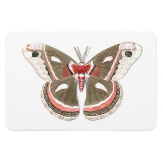 Cecropia Moth Flexi Magnet