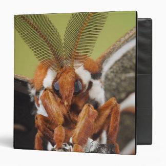 Cecropia Moth, Hyalophora cecropia, adult 3 Ring Binder