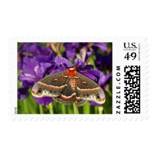 Cecropia Moth in flower garden Postage