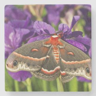 Cecropia Moth in flower garden Stone Beverage Coaster