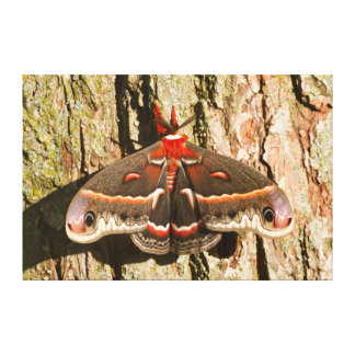 Cecropia Moth on tree trunk Canvas Print