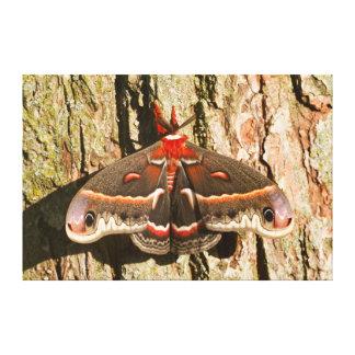 Cecropia Moth on tree trunk Canvas Print