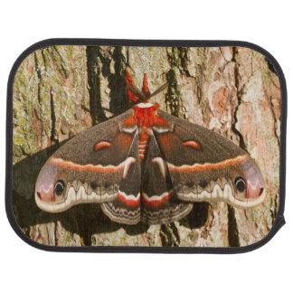 Cecropia Moth on tree trunk Car Floor Mat