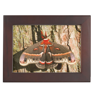 Cecropia Moth on tree trunk Memory Box