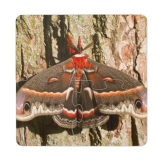 Cecropia Moth on tree trunk Puzzle Coaster