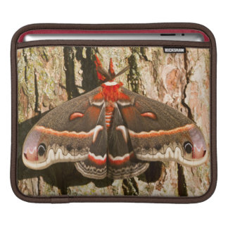 Cecropia Moth on tree trunk Sleeve For iPads