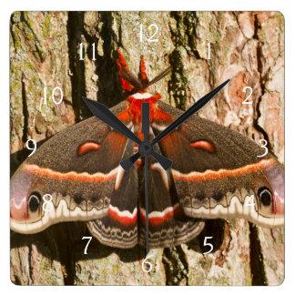 Cecropia Moth on tree trunk Square Wallclocks