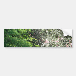 Cedar and Pink Dogwood Bumper Sticker