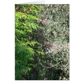 Cedar and Pink Dogwood Card