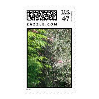 Cedar And Pink Dogwood Postage