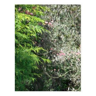 Cedar and Pink Dogwood Postcard