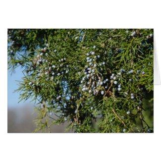 Cedar Berry Christmas