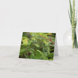 Cedar Branches Thank You Card