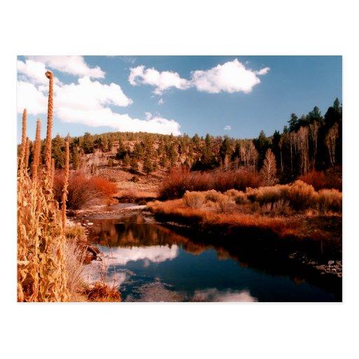 Cedar Breaks National Area, Utah Postcard