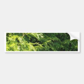 Cedar Hedge Car Bumper Sticker