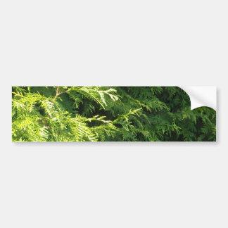 Cedar Hedge Bumper Sticker