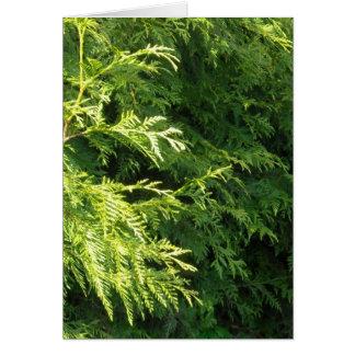 Cedar Hedge Card