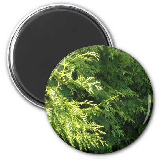Cedar Hedge Magnet