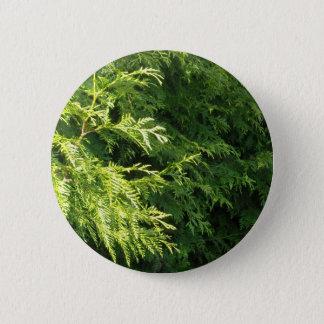 Cedar Hedge Pinback Button