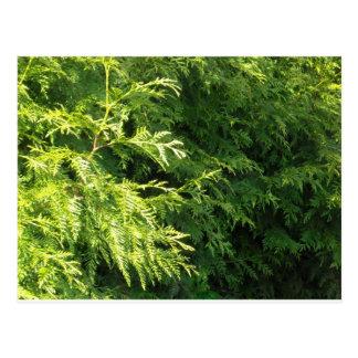 Cedar Hedge Postcard