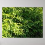 Cedar Hedge Poster