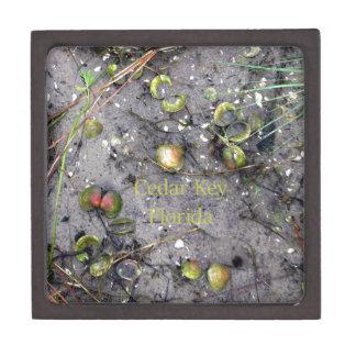 Cedar Key, Florida Beach Clams Jewelry Box