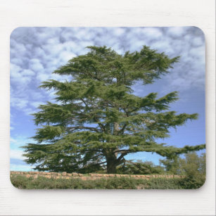Cedar of Lebanon Mouse Pad